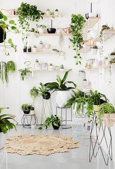 Standard Studio – Een groen interieur.