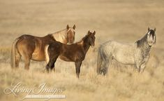 Final+Alert+-+Now+is+the+Time+Wild+Horses+Need+Your+Help+the+Most
