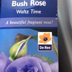 Bush Roses a garden favorite.from £4.99