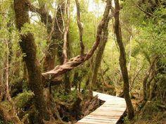 Chiloe National Park