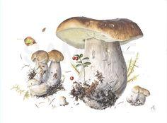 Boletus Edulis by one of my favorite botanical artists, Alexander (Sasha) Viazmensky...what marvelous work!