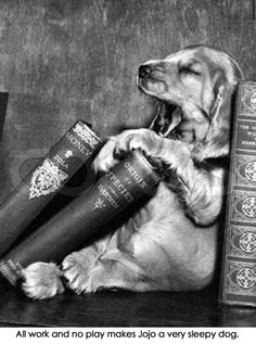 What could be better than a sleepy pup and books? Baby Animals, Funny Animals, Cute Animals, Golden Retrievers, Mundo Animal, I Love Books, Mans Best Friend, Dog Life, Puppy Love