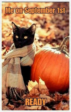Fall Humor, Fall Memes, Body Shop At Home, Happy Fall Y'all, Months In A Year, Fall Harvest, Color Street, I Fall, Diy Autumn