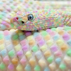 snakepastelsnake