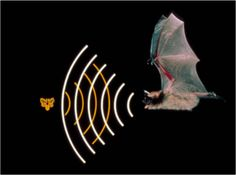 September 29, 2015. We played this bat echolocation game: http://gen.uga.edu/documents/pest/Bat%20and%20Moth.pdf