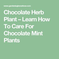 Chocolate Herb Plant – Learn How To Care For Chocolate Mint Plants
