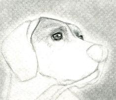 como aprender a dibujar animales domesticos a lapiz 6