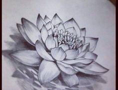 """Résultat de recherche d'images pour """"realistic lotus flower drawings"""" #FlowerTattooDesigns"""