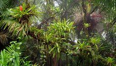 El Yunque Rain Forest . My favorite place to visit in Puerto Rico. El Yunque mi sitio favorito cuando voy para la isla.
