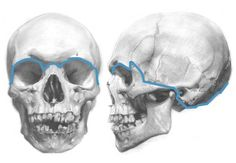 Understanding the Anatomy of the Skull  http://www.artistdaily.com/blogs/features/archive/2009/05/06/understanding-anatomy-the-skull.aspx?a={Field:StoreCode}_mid=632647=236815533