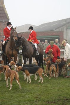 Fox Hunt. This is what I got to do today!