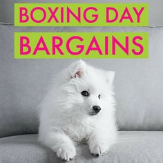 Best Boxing Day bargains for your dog Boxing Day, Pet Shop, Pet Supplies, Your Dog, Pets, Pet Store, Pet Products, Pet Accessories, Animals And Pets