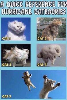 Hurricane Matthew memes are funny! Funny Animal Memes, Funny Animal Pictures, Funny Cats, Funny Animals, Cute Animals, Animal Funnies, Animal Jokes, Funny Memes, Cat Memes