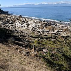 Many beaches along Puget Sound are piled high with logs that have drifted in, making them a fun playground.   #travel #washington #beaches