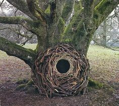 Andy Goldsworthy - Openings GCSE Art