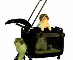Tutto Medium Pet on Wheels Stroller, Black >>> See this great image (This is an affiliate link and I receive a commission for the sales) : Cat Cages, Carrier and Strollers Wireless Dog Fence, Dog Stroller, Dog Shock Collar, Cat Cages, Dog Car Seats, Best Dog Training, Cat Carrier, Puppy Care, Small Cat