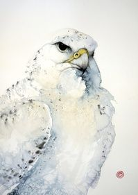 Gyr Falcon - Karl Martens - watercolor