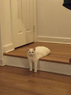 何が琴線に触れたのか…段差に座る猫がコラ祭りに