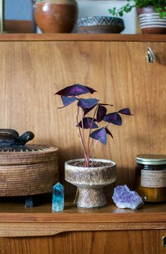 The cool thing about having a plant as unique as an Oxalis? They're so easy to style! We just love how this plant looks among all the crystals & vintage trinkets!