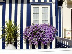 Typical houses of Aveiro