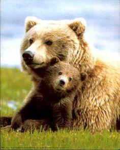 Bears my favorite