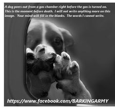 Please spay and neuter to prevent this!!!