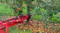 The harvesting of apples | Máy thu hoạch táo ngọt nhanh ở Mỹ