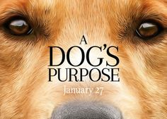 """The upcoming movie """"A Dog's Purpose"""" is reportedly under investigation for animal abuse."""