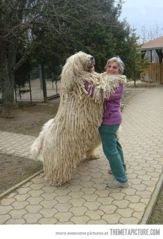 dog toys for big dogs | 25 August, 2012 in Funny , Pictures | Comment