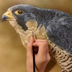 "New peregrine piece.. 14"" x 11"", detail, watercolor on board with sterling silver, ©Rebecca Latham #wildlife #watercolor #art #animals #painting #miniature #nofilter #artist #miniatureart #realism #workinprogress #animallovers #falcon #raptor #raptors #peregrine"