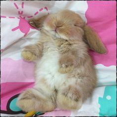 bébé lapin coucher sur le dos