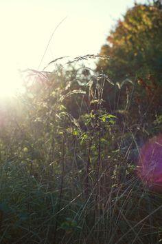 Autumn sun  Photo by Jorinde Reijnierse