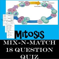 Mitosis by Brainiac Teacher High School Biology, Ap Biology, Middle School Science, Teacher Pay Teachers, Teacher Resources, Question Quiz, Rock Cycle, Mitosis