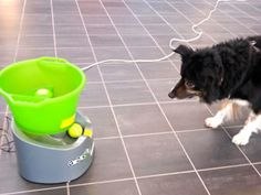 My 10 year old Border Collie gets to fetch longer than usual with GoDogGo Fetch Machine - Awesome!