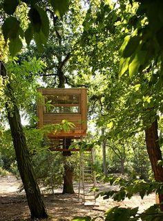 Wood Tree-House Design