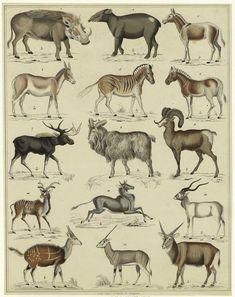 scientific illustration animals - Pesquisa Google