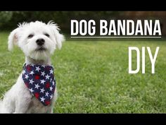DIY Dog Bandana / Bandana de Mascota - YouTube