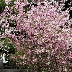 【lumas_australia】さんのInstagramをピンしています。 《The cherry and plum #blossoms have a special significance to the #Chinese. The trees are the first to bloom even as #snow is melting after a harsh #winter. They represent the #promise of #spring and a #renewal of #life. #Celebrating the Chinese New Year - The year of the Rooster.⠀ ⠀ Pictured: Keiko © Olivier Föllmi, au.lumas.com #linkinbio⠀ ⠀ #chinesenewyear2017 #chinesenewyear #cherryblossoms #yearoftherooster #nature #red #photography #picoftheday…