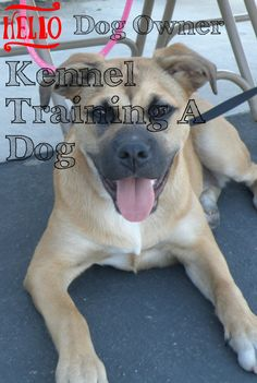 Great Kennel Training A Dog Advice Anybody Can Utilize ** Click image to read more details. Kennel Training A Puppy, Puppy Kennel, Training Your Puppy, Dog Training Tips, Puppy Schedule, Training Schedule, Crate Training, Happy Dogs, Dog Owners