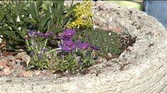 197 best colorado gardening images on pinterest aspen colorado colorado and gardening tips. Black Bedroom Furniture Sets. Home Design Ideas