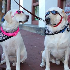 These dogs are chilling in downtown Savannah today!