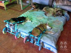 """so sweet these two can sleep 'on' the bed like the others. - They are """"disabled"""" and are in """"Wheelchairs"""" for dogs."""