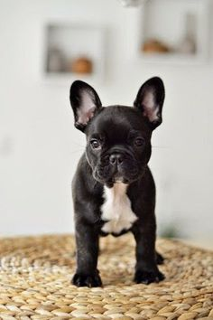 5 Family Friendly Dog Breeds, lets see what are they?