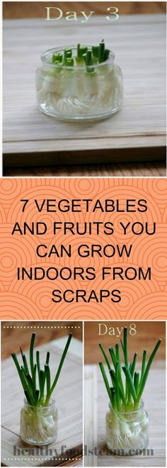 7 VEGETABLES AND FRUITS YOU CAN GROW INDOORS FROM SCRAPS – Healthy Foods Team