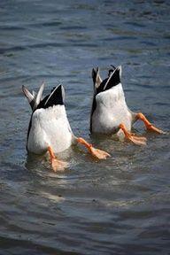 Synchronized Swimming?! Lol very cute