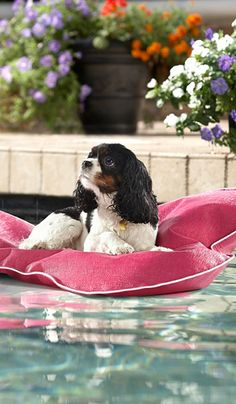 Invite your pooch to join in on the pool fun with our Aqua Pup Float. This bone-shaped floating bed will keep your best friend comfortable in the pool, on the deck or even in the house.