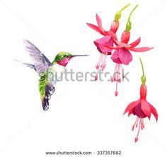 Watercolor Bird Hummingbird Flying Around the Fuchsia Flowers Hand Drawn Summer Garden Illustration Set isolated on white background