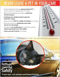 Never leave a pet in a car! Cars heat up fast and pets can die from heatstroke. Share this infographic to educate other pet parents and protect pets. Dog Safety, Safety Tips, Summer Safety, Cat Hacks, Kitten Care, Cat Care Tips, All About Cats, Enjoying The Sun, Dog Training Tips