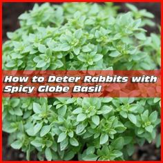 My green house and garden on pinterest bottle trees - How to deter rabbits from garden ...