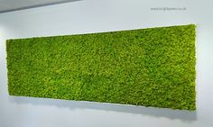 Preserved Lime Green Reindeer Moss Wall Panel with a Frame